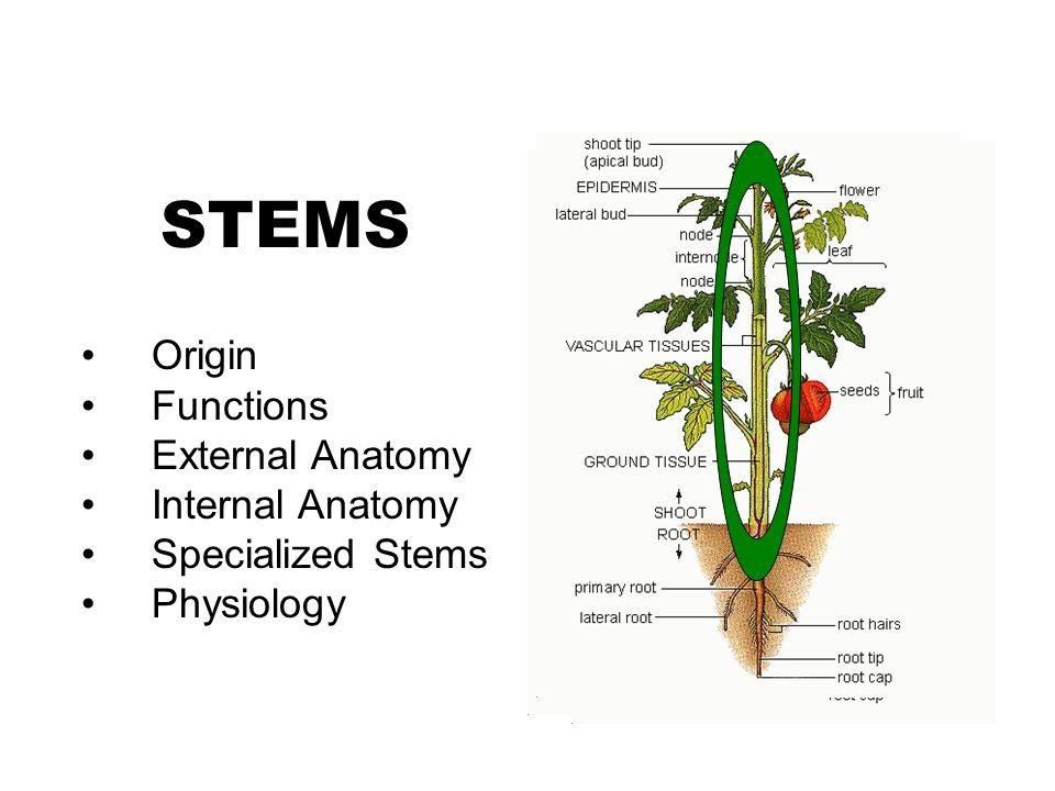 STEMS Origin Functions External Anatomy Internal Anatomy - ppt video ...