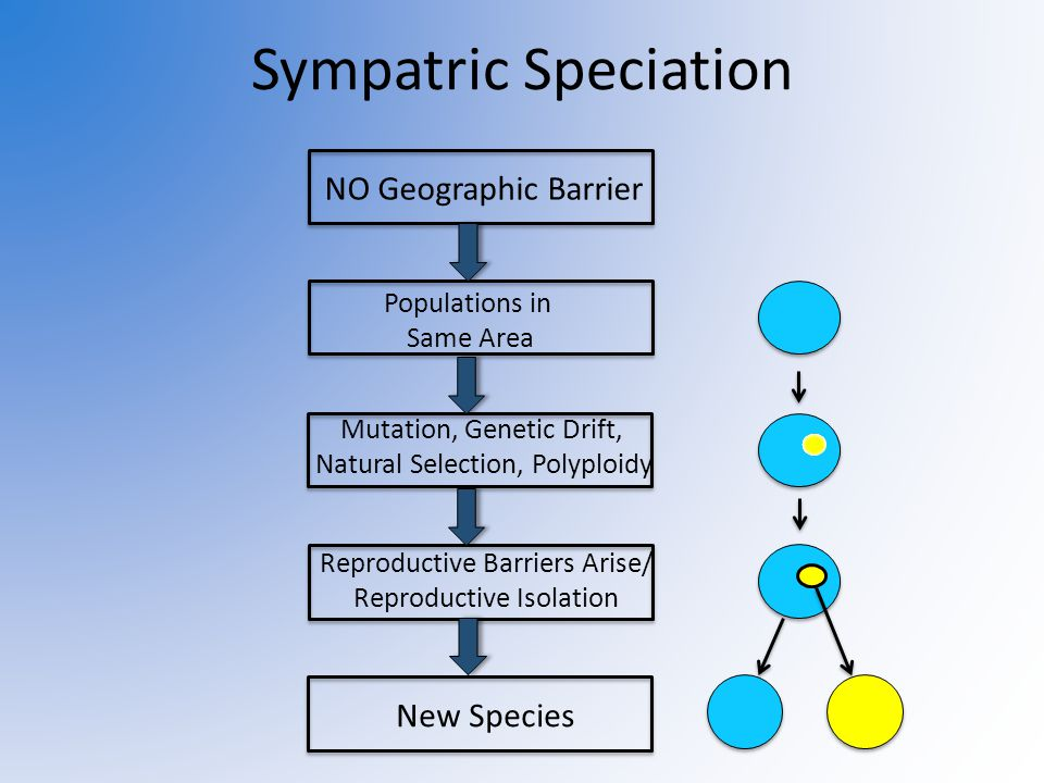 Compare Genetic Drift And Natural Selection
