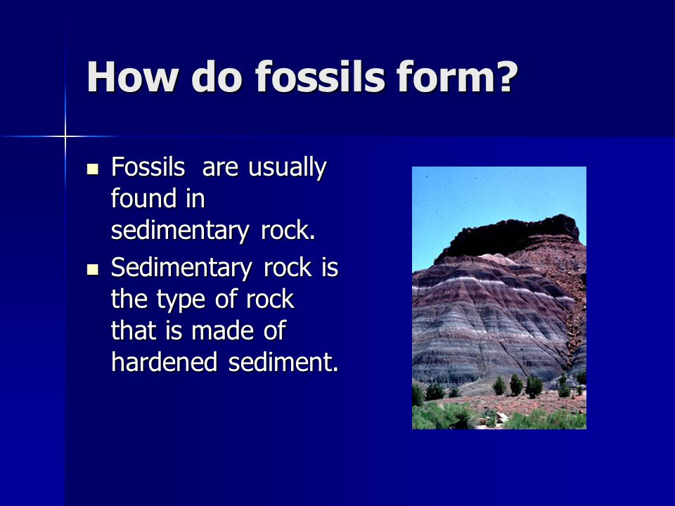 Fossils Essential Questions: What are fossils and how are they ...