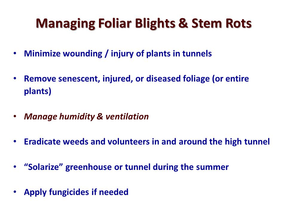 Managing Foliar Blights & Stem Rots