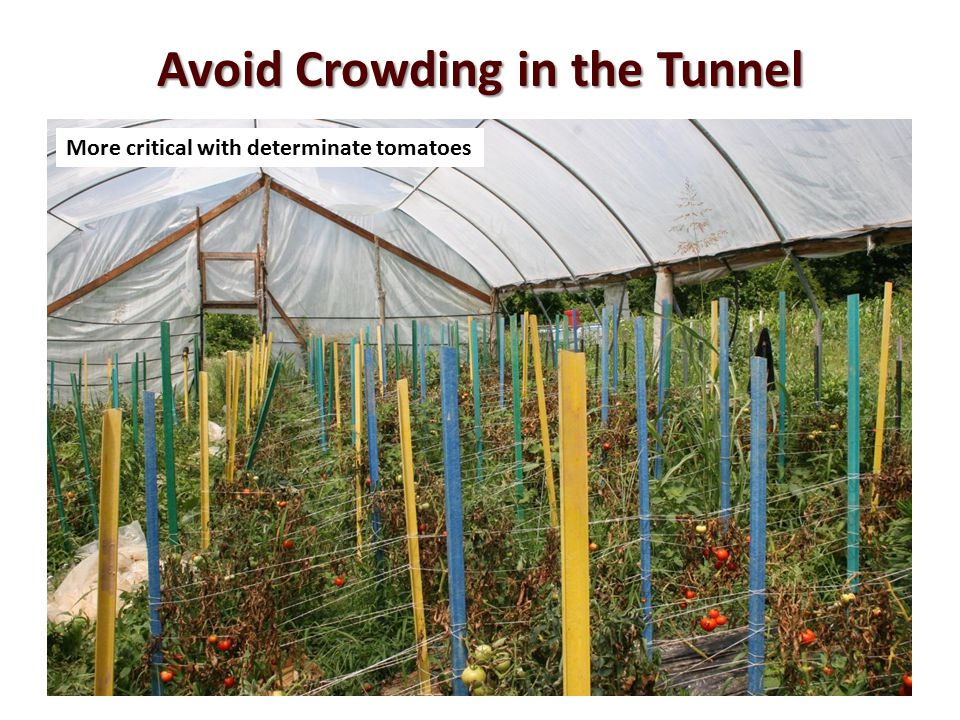Avoid Crowding in the Tunnel