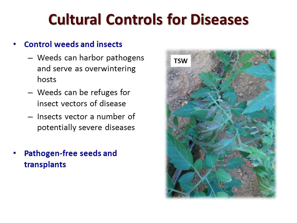 Cultural Controls for Diseases