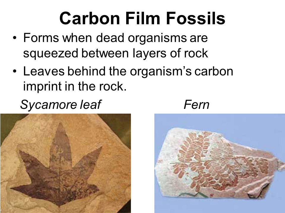 Fossils Fossils are preserved remains or traces of living things ...