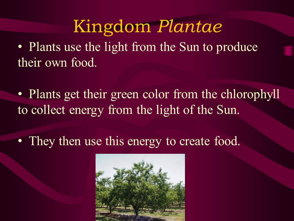 Kingdom Plantae Plants use the light from the Sun to produce their own food.