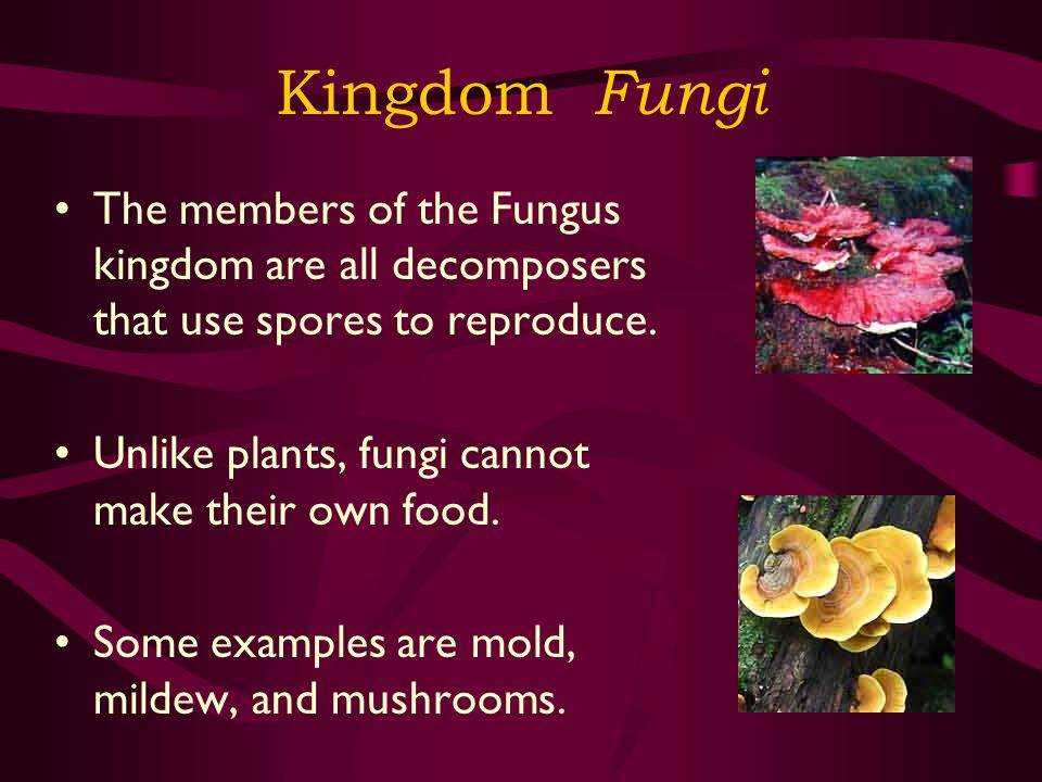 Kingdom Fungi The members of the Fungus kingdom are all decomposers that use spores to reproduce. Unlike plants, fungi cannot make their own food.