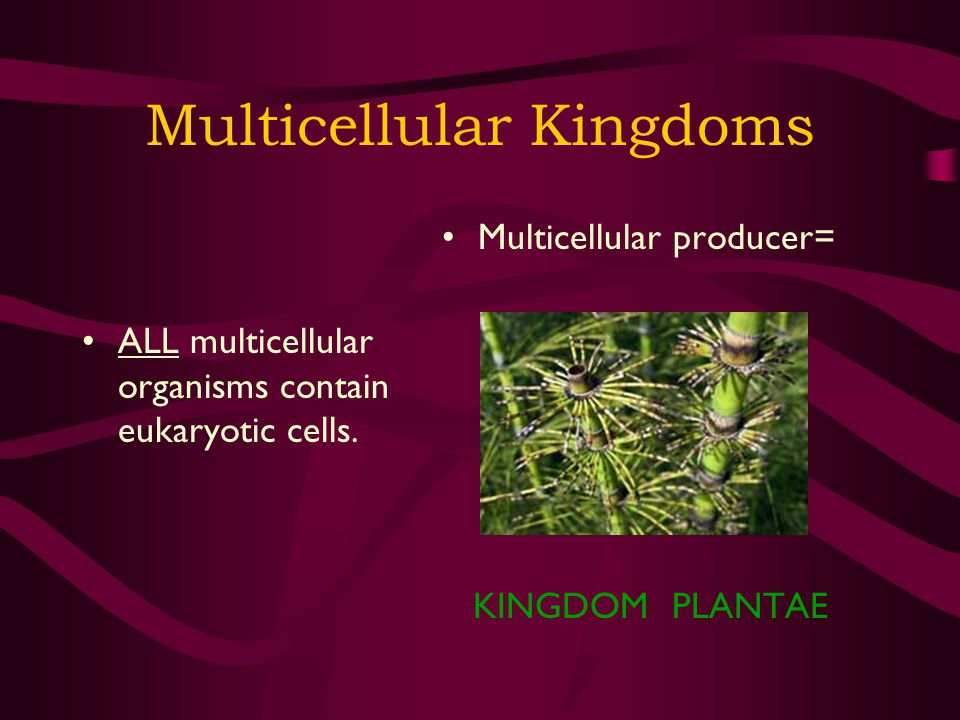 Multicellular Kingdoms