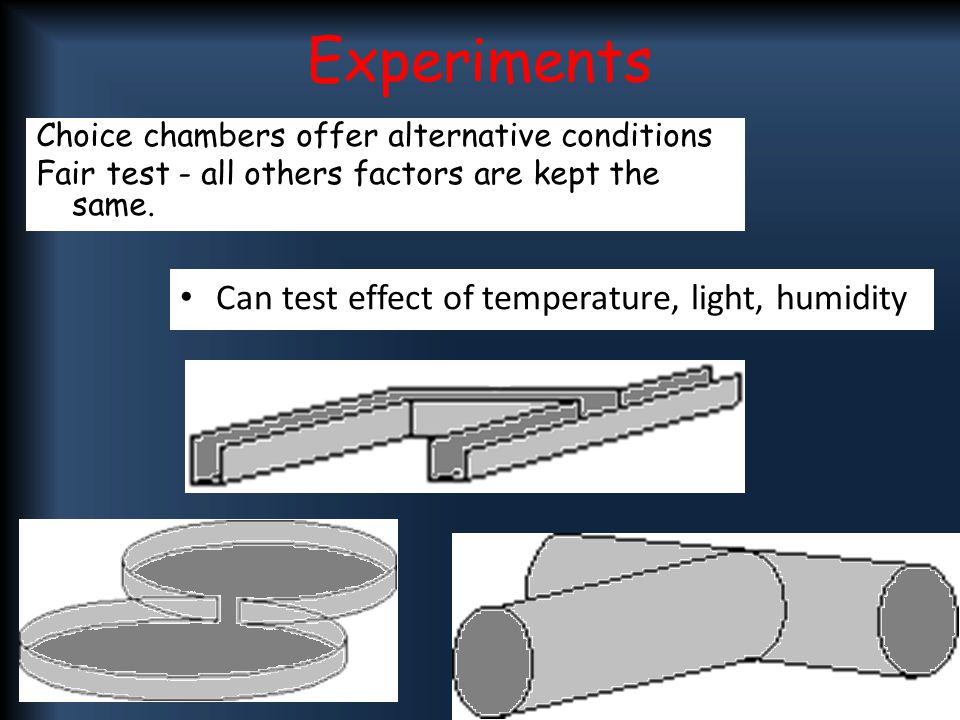 """the effect of temperature on blowfly Weathercom decided to look at what effect weather has on the decomposition  """"temperature is the number one thing that influences the rate of."""