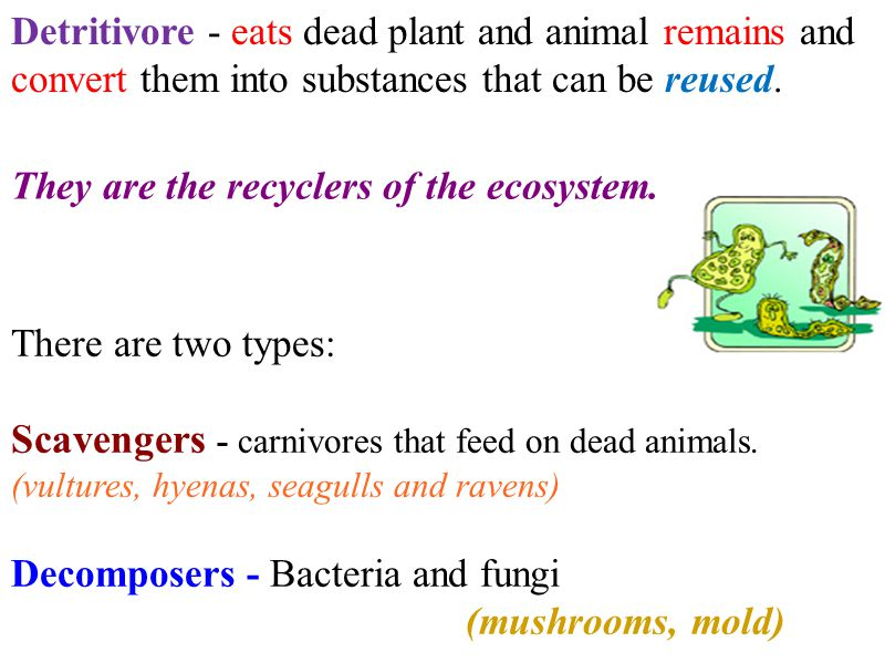 Scavengers - carnivores that feed on dead animals.