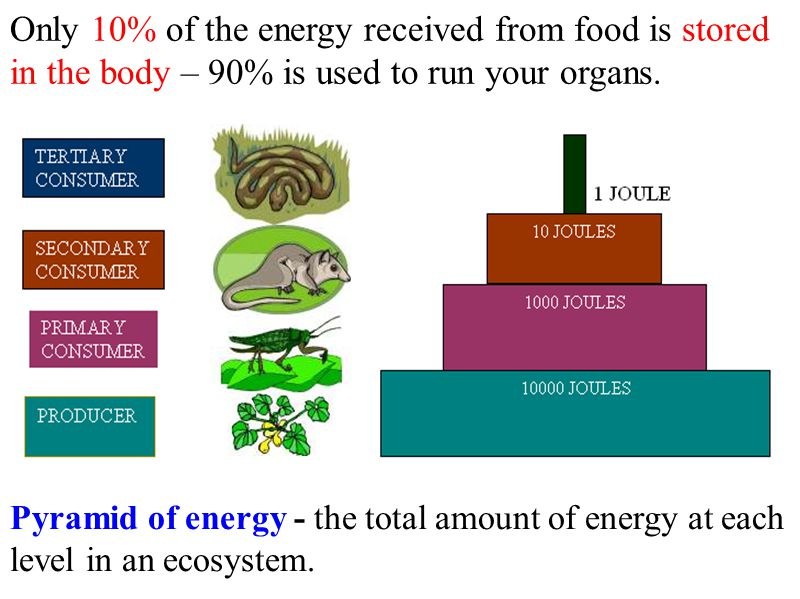 Only 10% of the energy received from food is stored in the body – 90% is used to run your organs.