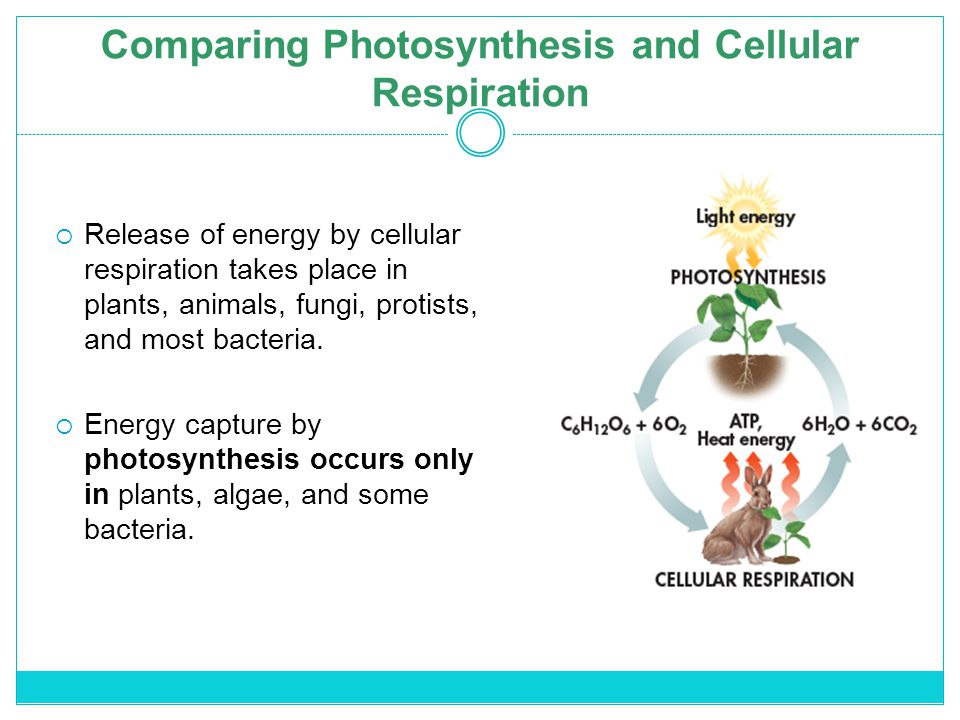 compare photosynthesis and cellular respiration