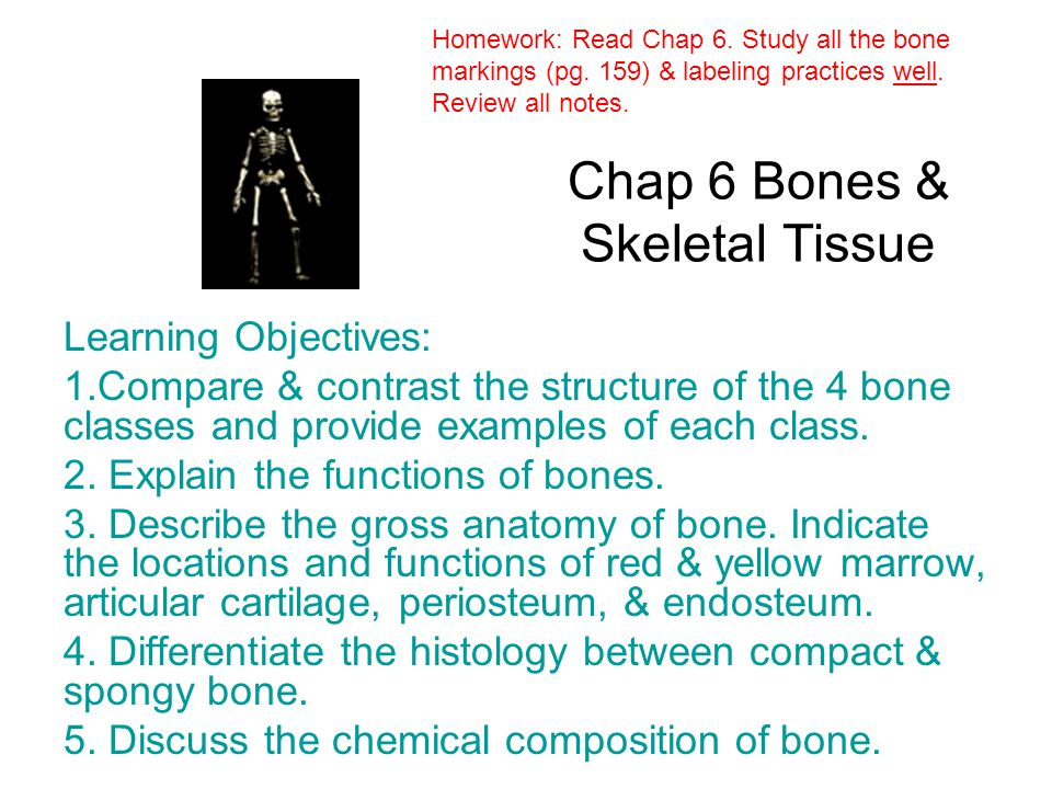 Chap 6 Bones & Skeletal Tissue - ppt video online download