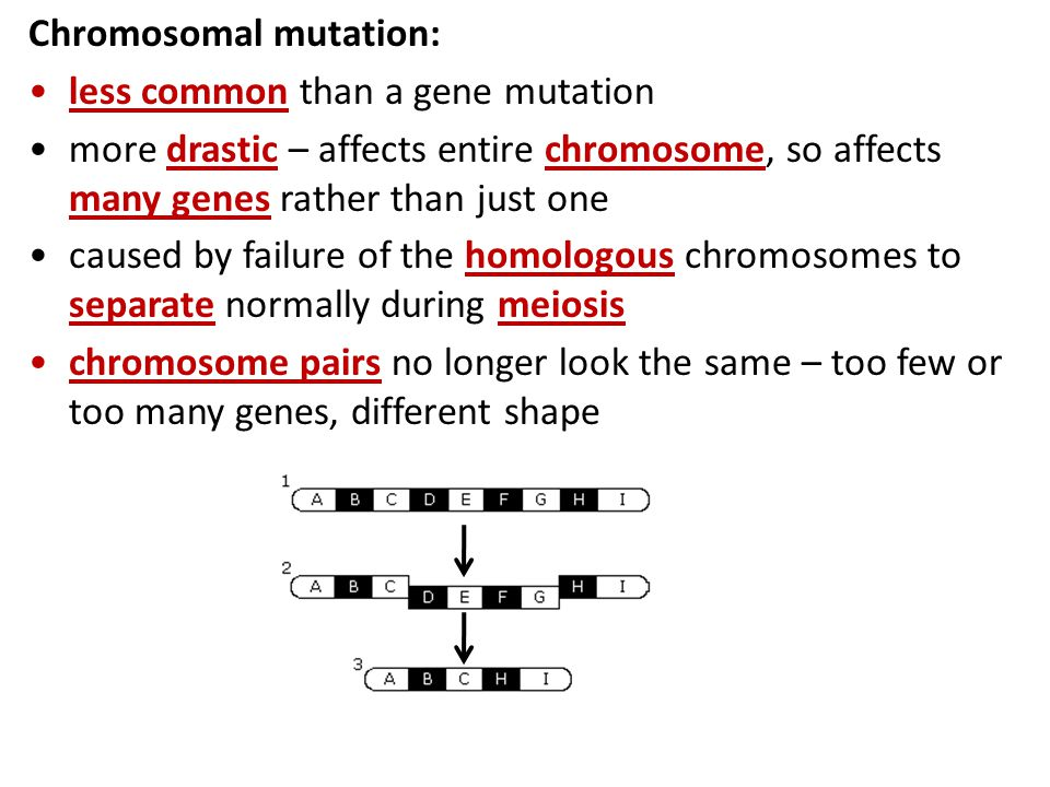 Chromosome Mutation Worksheet Worksheets For School Getadating – Gene Mutation Worksheet
