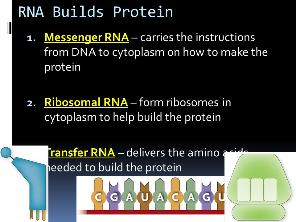 RNA and PROTEIN SYNTHESIS - ppt video online download