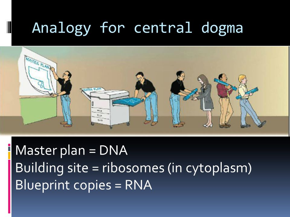 Rna and protein synthesis ppt video online download analogy for central dogma malvernweather Gallery