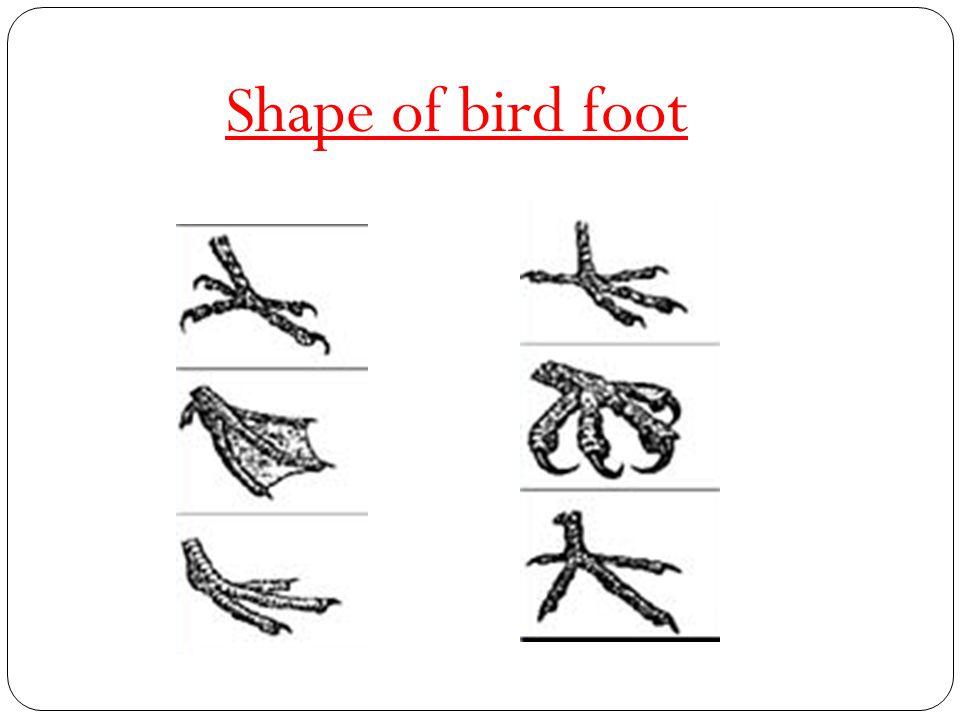 birds class iv prepared by