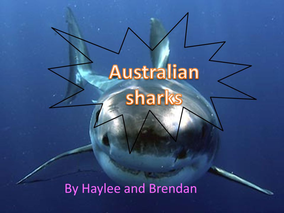 Australian sharks By Haylee and Brendan