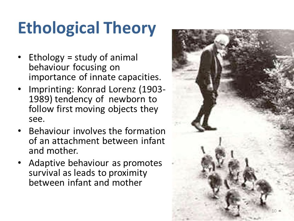 Research papers on ethological behaviour of animals