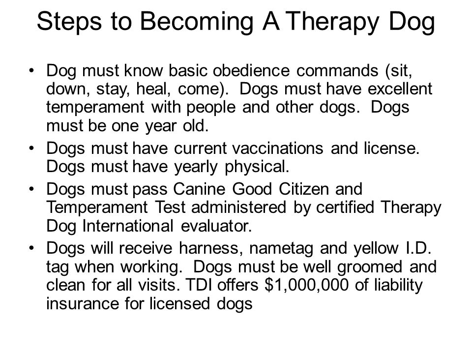 how to get a therapy dog license