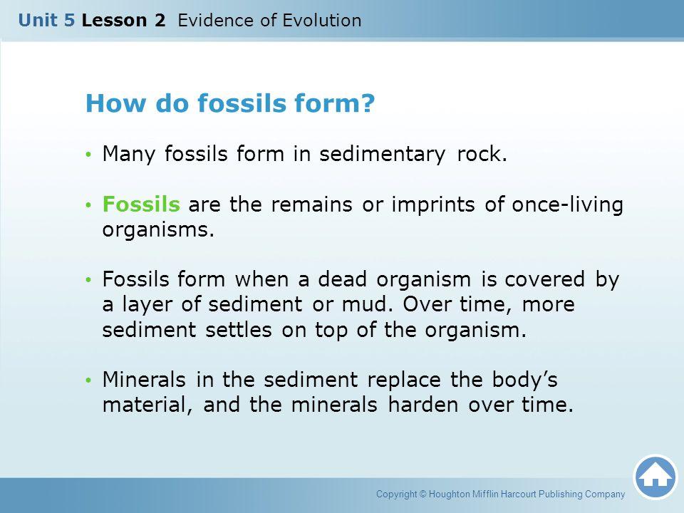 Unit 5 Lesson 2 Evidence of Evolution - ppt video online download