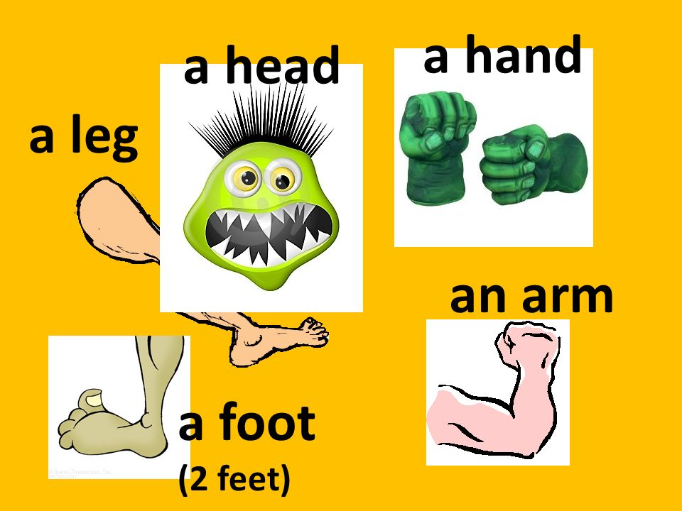 a hand a head a leg an arm a foot (2 feet)