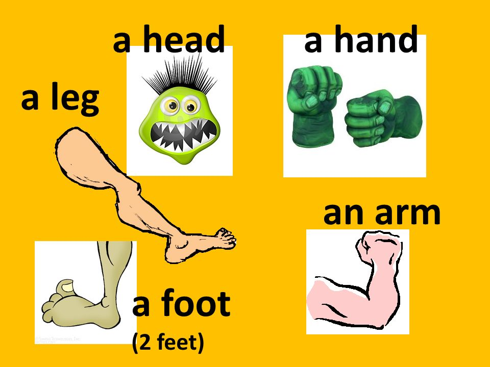 a head a hand a leg an arm a foot (2 feet)