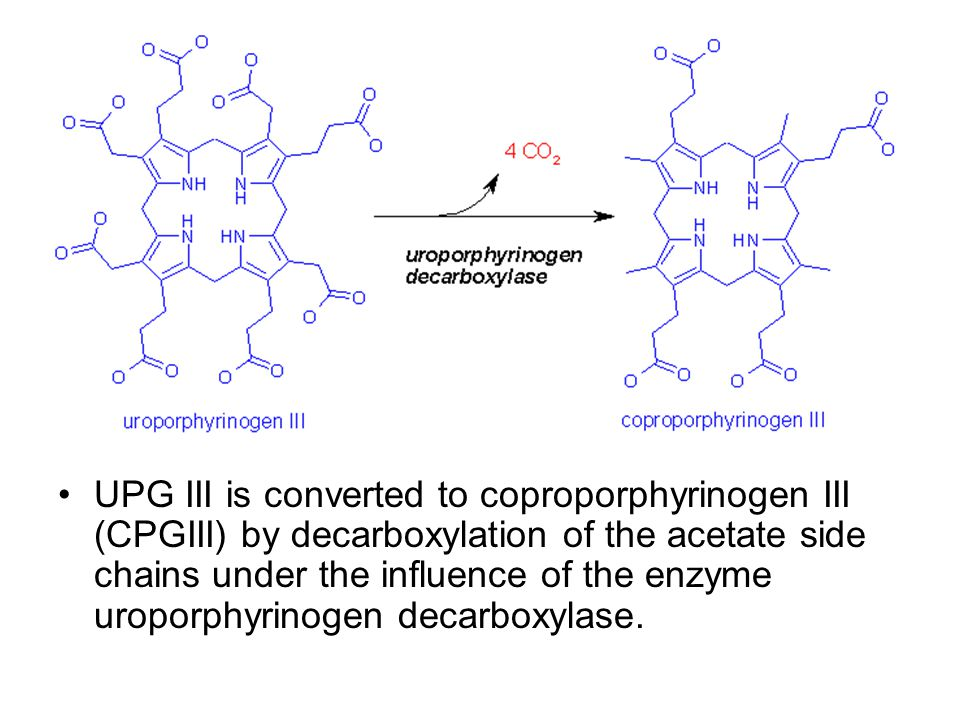 UPG III is converted to coproporphyrinogen III (CPGIII) by decarboxylation of the acetate side chains under the influence of the enzyme uroporphyrinogen decarboxylase.