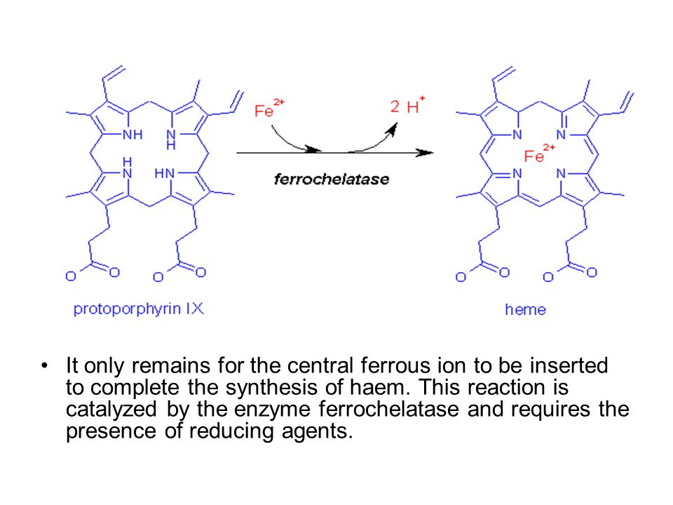 It only remains for the central ferrous ion to be inserted to complete the synthesis of haem.