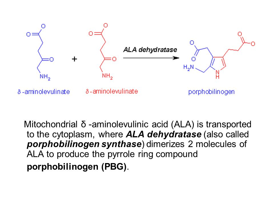 Mitochondrial δ -aminolevulinic acid (ALA) is transported to the cytoplasm, where ALA dehydratase (also called porphobilinogen synthase) dimerizes 2 molecules of ALA to produce the pyrrole ring compound porphobilinogen (PBG).