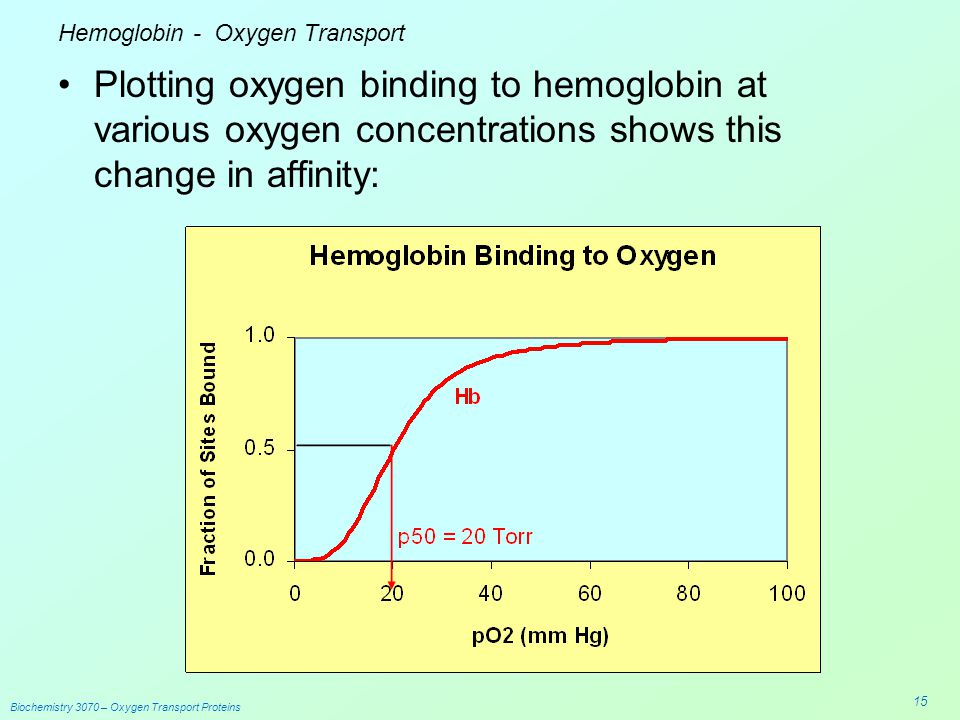 the importance of hemoglobin in transporting oxygen Oxygen & o2 carrying capacity which is why hemoglobin is so important) a) hemoglobin in addition to oxygen, hemoglobin can also bind co 2 and co.