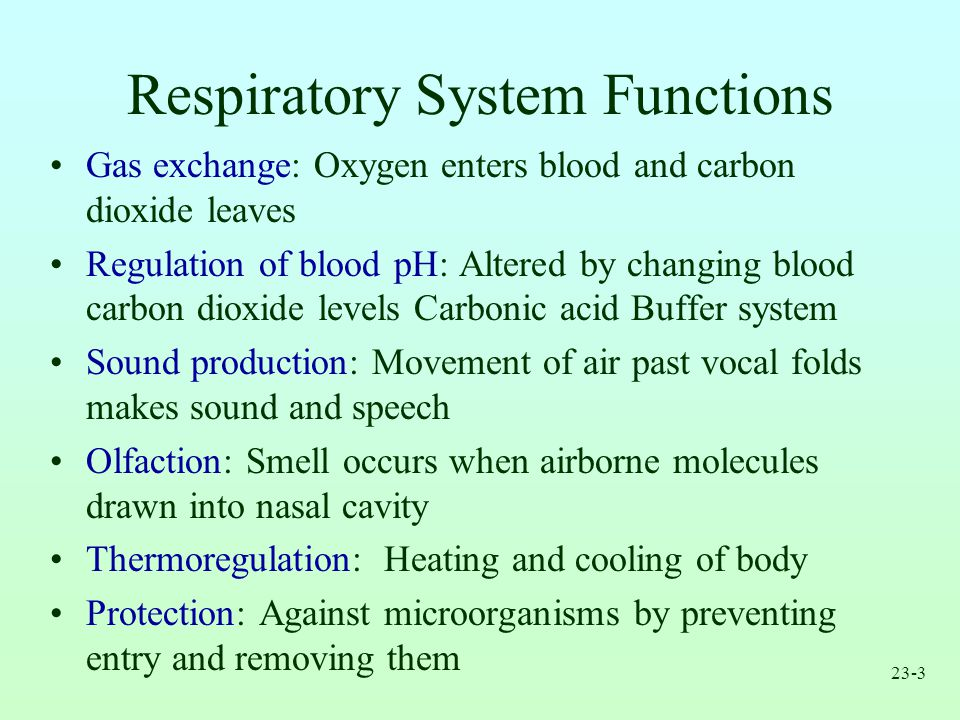respiratory system. - ppt video online download, Cephalic Vein