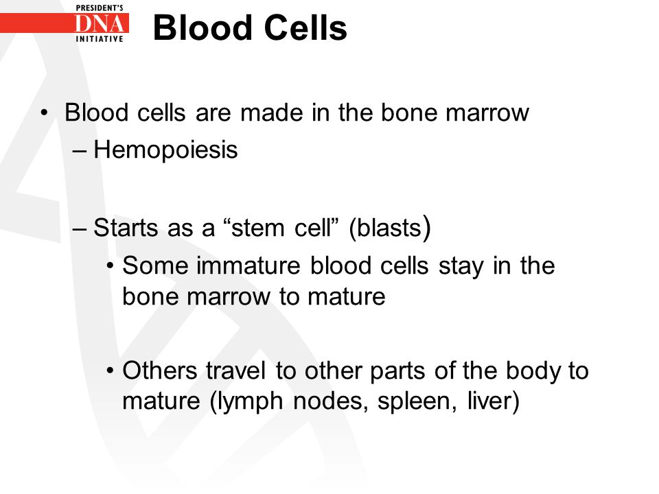 Blood Cells Blood cells are made in the bone marrow Hemopoiesis