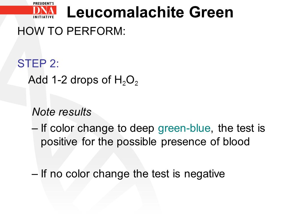 Leucomalachite Green HOW TO PERFORM: STEP 2: Add 1-2 drops of H2O2