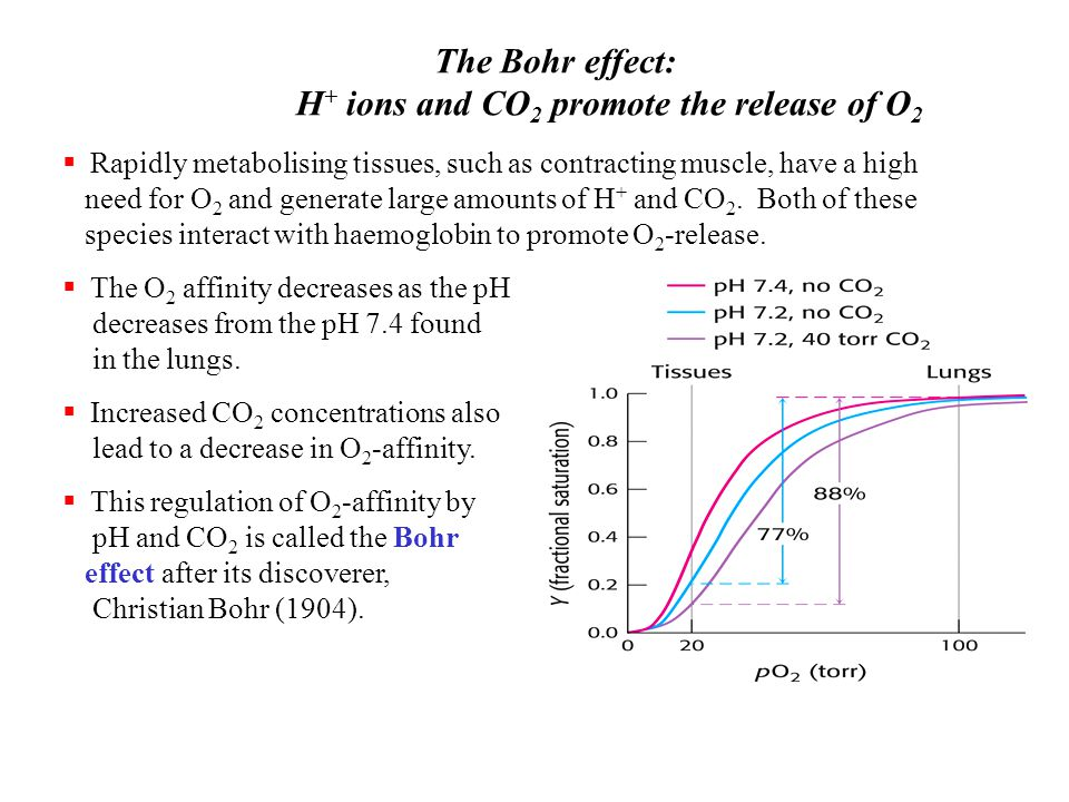 Transport Of O2 And Co2 By Hemoglobin Ppt Video Online