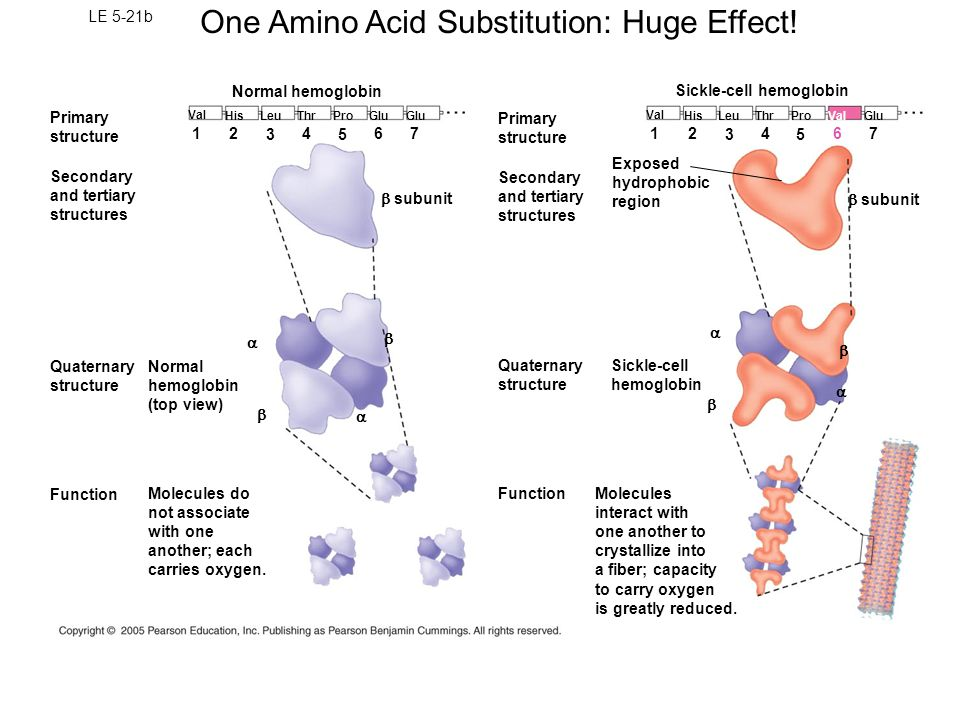 Proteins Function and Structure. - ppt video online download