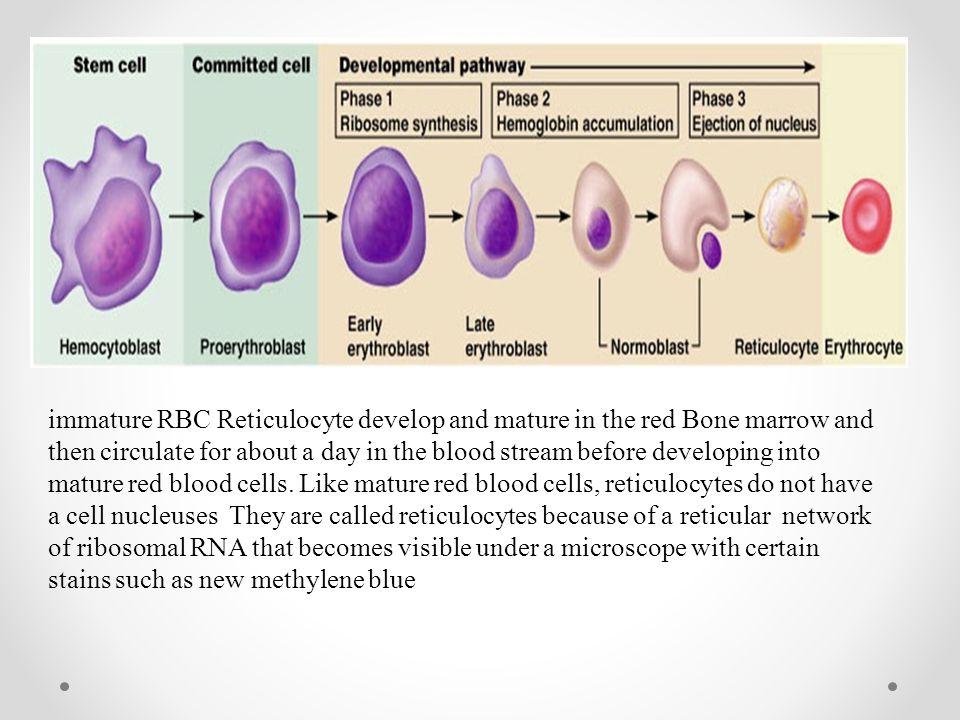 Hemoglobin structure. Hemoglobin and anemia , hematocrit(HCT) and ...