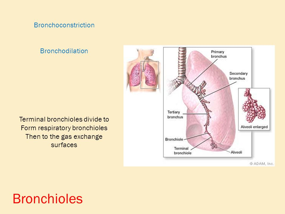 Respiratory System More than just breathing. - ppt video online ...