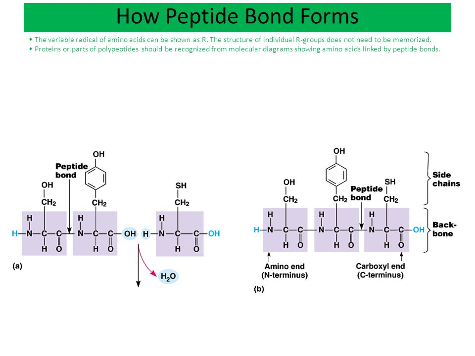 Ch 4: Carbon Chemistry Ch 5: Macromolecules - ppt download