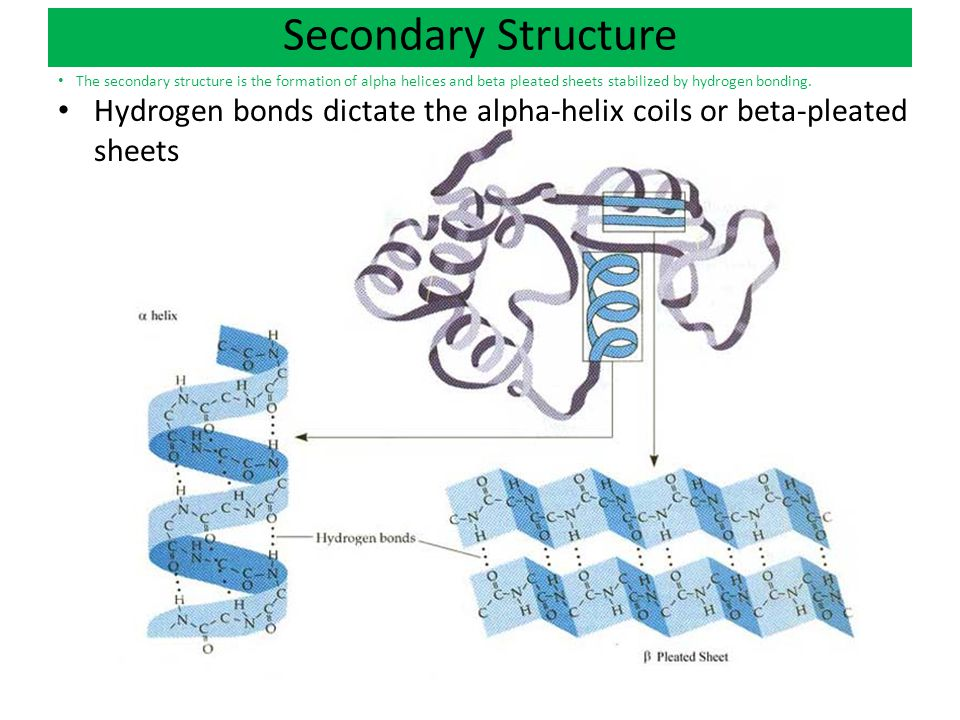 Alpha Helix And Beta Pleated Sheet Ch 4: Carbon Chemistry...