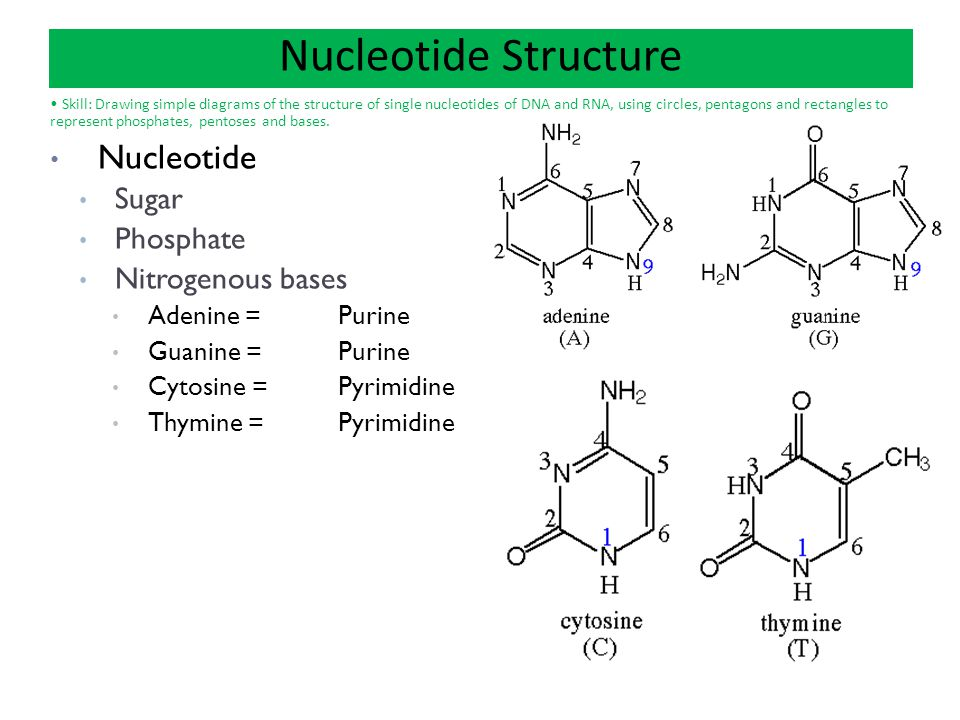ch 4 carbon chemistry ch 5 macromolecules ppt download