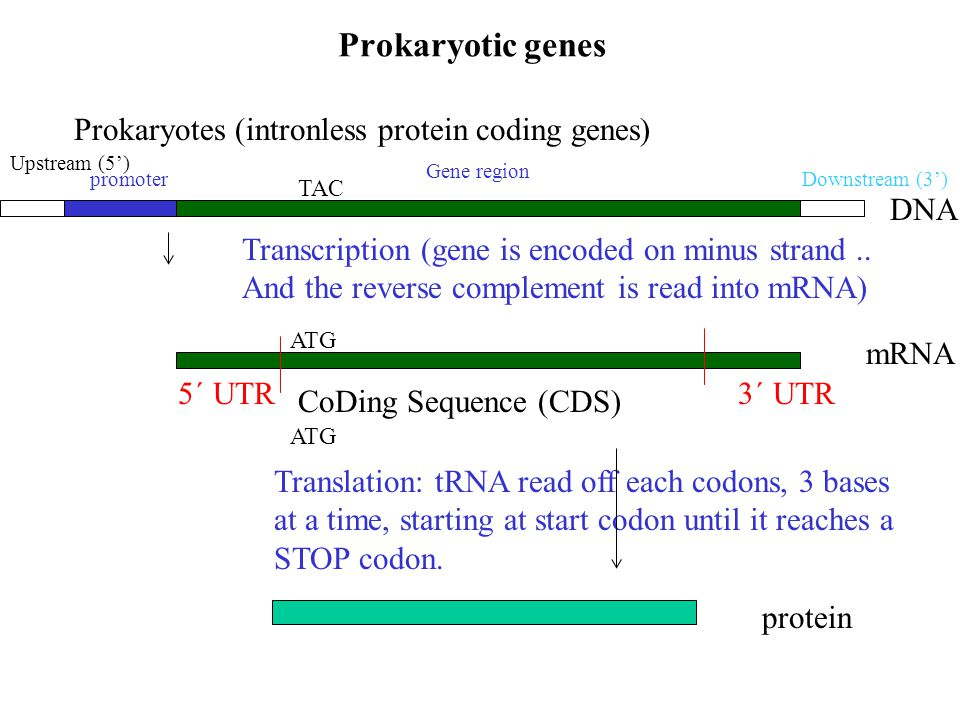 how to read dna 5 3