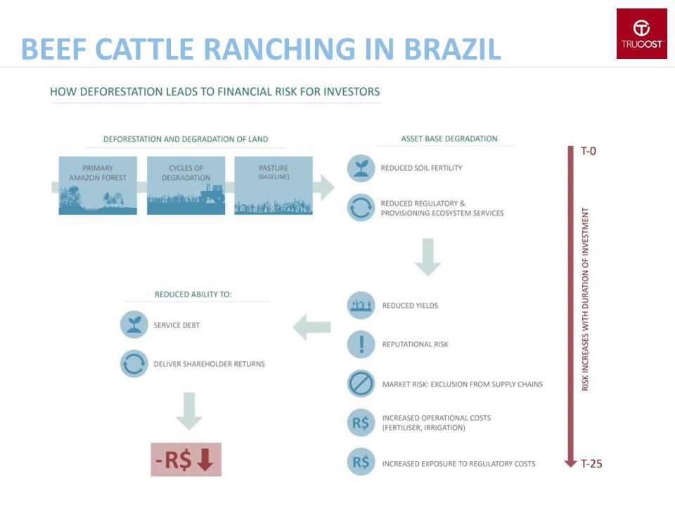 Beef cattle ranching in brazil