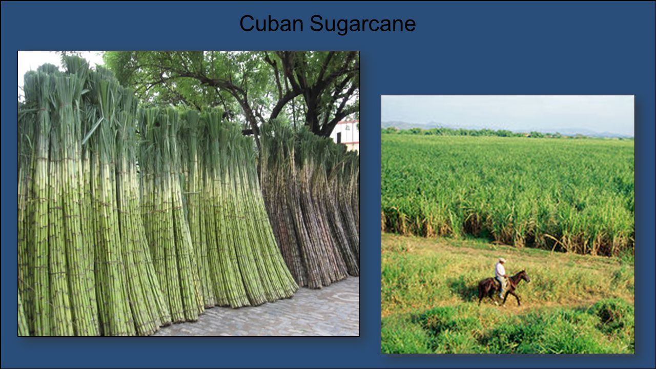 Top Sugarcane Producing Countries