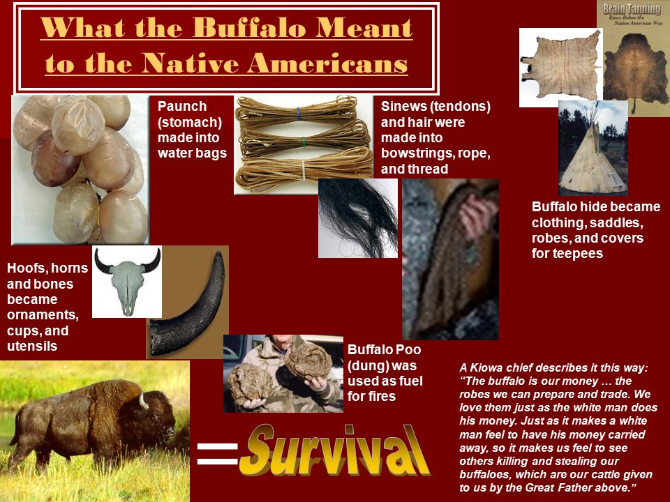 What the Buffalo Meant to the Native Americans