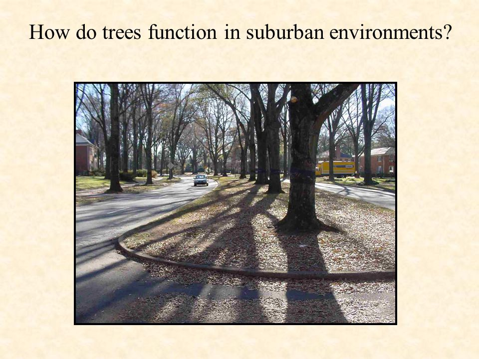 How do trees function in suburban environments