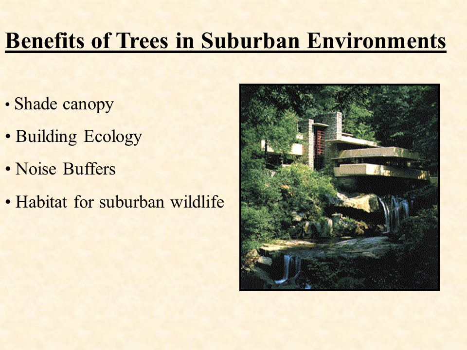 Benefits of Trees in Suburban Environments