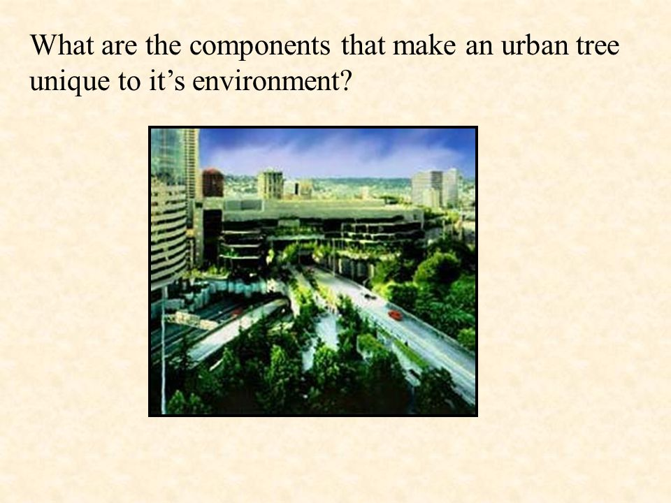 What are the components that make an urban tree unique to it's environment