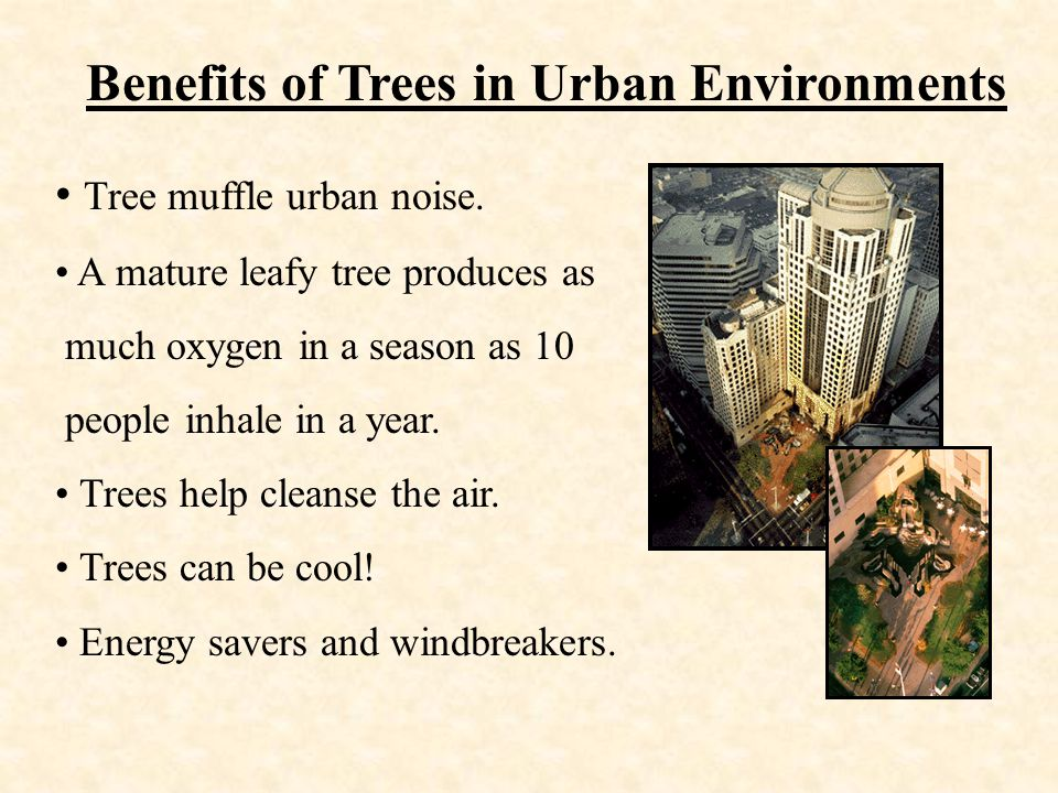 Benefits of Trees in Urban Environments