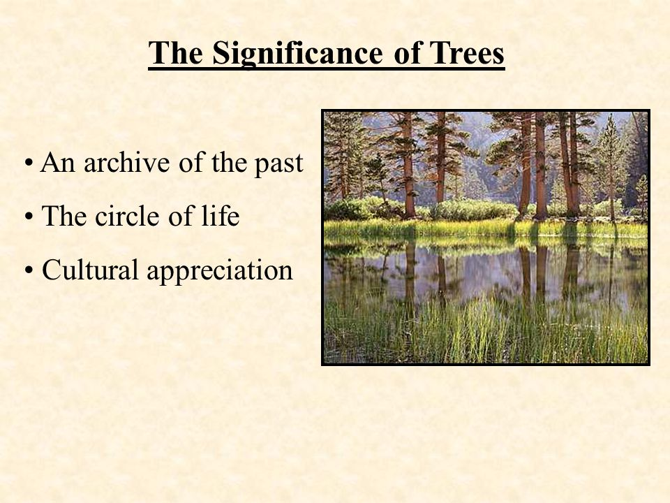 The Significance of Trees