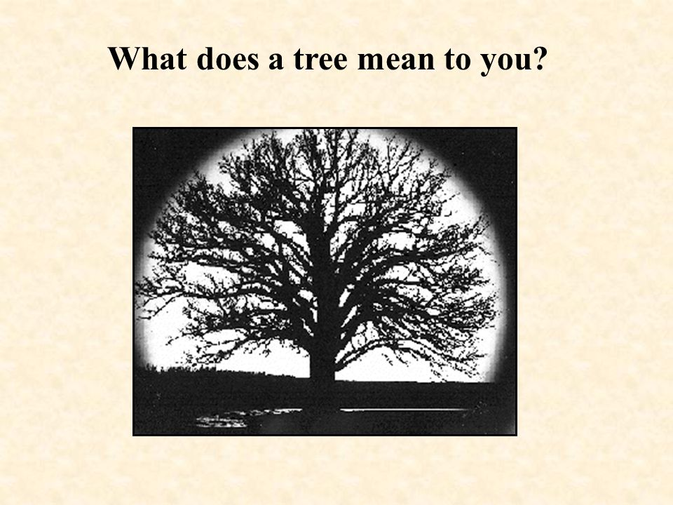 What does a tree mean to you