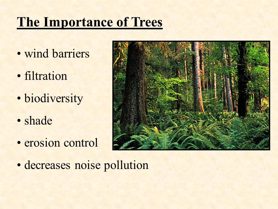 The Importance of Trees